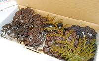 無農薬栽培「荻野農園が今育てているきのこの箱詰」